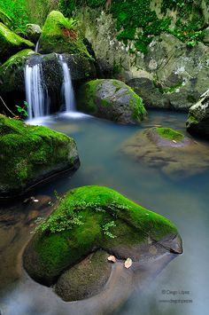 Green by Diego Lopez. National park Andalucia, Spain