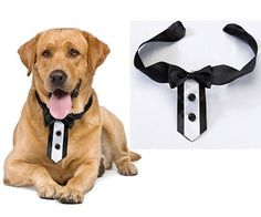 Tuxedo Dog Collar. Awe my little Nemo would look just way too adorable in this!
