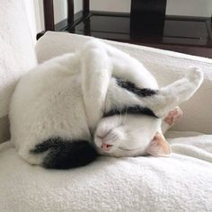 Ideas funny cats sleeping sleepy kitty for 2019 Cute Funny Animals, Cute Baby Animals, Cute Cats, Funny Kitties, Funny Cat Memes, Funny Dogs, Image Chat, Gatos Cats, Cat Aesthetic