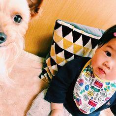 ずんだ兄 . 兄弟 . #zunstagram#ずんぽ#犬#わんこ#愛犬 #dog#ヨーキー#ヨーキーミックス#犬バカ部#ig_dogphoto#canine#mixed#mongrel#todayswanko#5歳#5yearsold#ig_dogphoto#mixdog#mix犬#ぼさぼさ部#doglife#ilovedogs#doglovers#baby