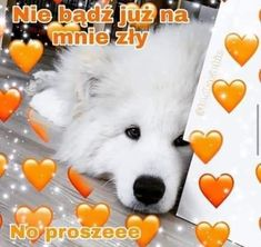 Sweet Memes, Cute Memes, Self Deprecating Humor, Weekend Humor, Cute Words, Sweet Pic, Cute Cats And Dogs, Reaction Pictures, Cringe