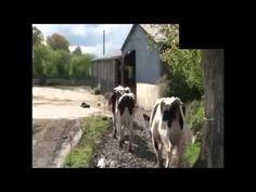 우리가 알지 못했던 우유의 비밀과 목초우유 내추럴플랜(naturalplan)