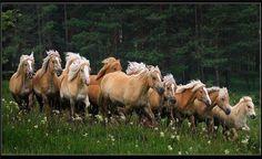 Beautiful Horses - Nice Photo !