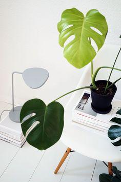 It's a lamp. It's a plant. It's a lamp plant? @thecoveteur
