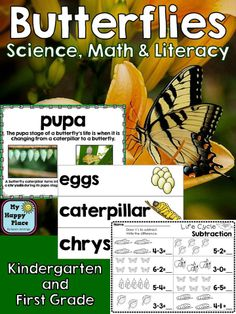 Butterfly Life Cycle, anchor charts, worksheets, informational writing, kindergarten first grade, $