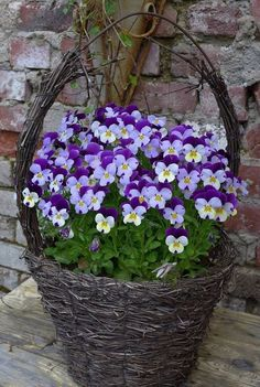 Container gardening is a fun way to add to the visual attraction of your home. You can use the terrific suggestions given here to start improving your garden or begin a new one today. Your garden is certain to bring you great satisfac Container Flowers, Container Plants, Container Gardening, Purple Flowers, Spring Flowers, Beautiful Flowers, Beautiful Places, Des Fleurs Pour Algernon, Outdoor Plants