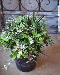 NanaはInstagramを利用しています:「久々に心のままに花遊び。 人間だから作品にも色々反映してしまうなー。いかんいかん。 来週はほぼ外仕事の予定です💦 27日、29日は臨時休業日。 その他は午後からOpenです。 ネットショップは通常営業しております(*´ ˘ `*) #花で免疫力アップ…」 Plants, Instagram, Plant, Planets