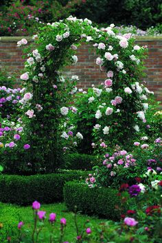 beautiful rose covered arch