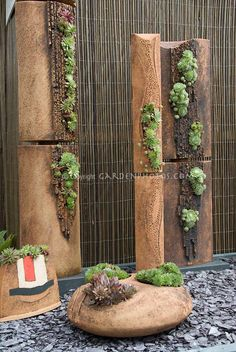 Succulent garden: sempervivums and sedums in vertical and interesting containers