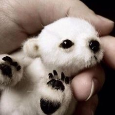 brand new baby polar bear