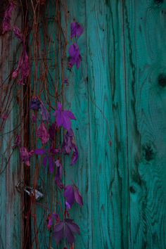 Aqua and Autumn Red Red And Teal, Shades Of Turquoise, Turquoise Color, Aqua Blue, Shades Of Blue, Turquoise Accents, Plum Purple, Teal Green, Color Red