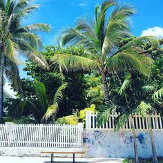 Bonne journée  et Bonne fête de la Saint Valentin  #lareunion #larun #landscape #reunionisland #iledelareunion #paysage #créole #tropical #tropiques #team974 #gotoreunion #goodday #igersreunion #weare974 #coconutree #palms #weekend #sunday #instagirl #islandlife #instagood #instalike #photooftheday #picoftheday #latergram by fab__ie