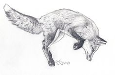 sketch of the day (day 23) This is a sketch/pencil work of a red fox jumping. Enjoy!