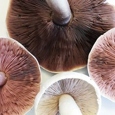 'The beauty of the natural world lies in the details.' The structure, the colours. Fungi, Mushroom Plant, Fotografia Macro, Color Stories, Colour Story, Organic Shapes, Nude Color, Botany, Textures Patterns