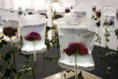 The stalks of these flowers are dried up but their blossoms are preserved & kept fresh by the medical infusion bags. The life-span of every living creature is limited. The infusion bags stand for the progress in medicine & the prolongation of human life. They carry a message as they refer to both death & life the same time. To preserve the beauty of the flowers artifically with the help of the infusion bags points out man's inclination to repress the fact that he has to die & to postpone…
