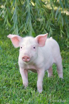 Kim Gordon Farm Animal Rescue