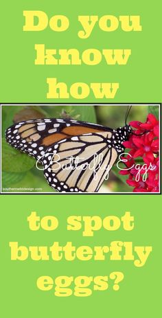 Do You Know How to Spot Butterfly Eggs?