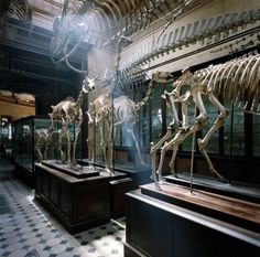 Museum of Natural Sciences, La Plata, Argentina, 1984