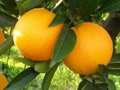 What Are the Benefits of Eating Oranges?, Are Oranges Good for You?, Wha...