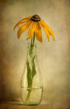 Rudbeckia by Mandy Disher Florals, via Flickr