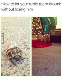 new Ideas funny animals memes make me laugh lol pets Funny Animal Memes, Cute Funny Animals, Funny Animal Pictures, Cute Baby Animals, Funny Cute, The Funny, Funny Memes, Funny Photos, That's Hilarious