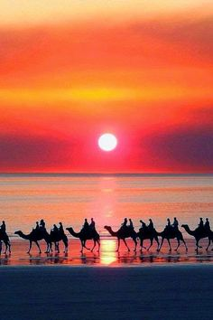 Sunset camel ride on Cable Beach, Broome, Western Australia - Beautiful Sunset Beautiful Beach Pictures, Beautiful Sunset, Beautiful Beaches, Beautiful World, Places Around The World, Around The Worlds, Jolie Photo, Australia Travel, Broome Australia