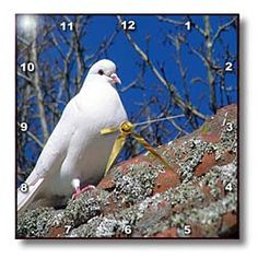 A White Dove Sitting on a Roof Top at The Hamilton Gardens in New Zealand Wall Clock