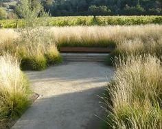 Grasses in the garden - 100 design ideas give old lawn new flair