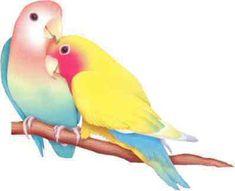 ♡ Lovebirds watercolor ♡