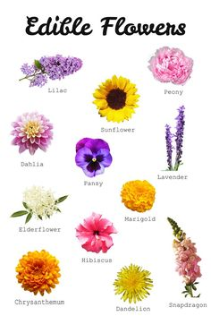 Your Guide To Edible Flowers - Southern Sisters HomeYou can find Edible flowers and more on our website.Your Guide To Edible Flowers - Southern Sisters Home Edible Plants, Edible Garden, Fruit Garden, Edible Art, Colorful Flowers, Beautiful Flowers, Happy Flowers, Rare Flowers, Exotic Flowers