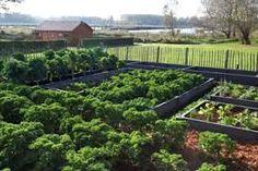 Afbeeldingsresultaat voor horta.org Plants, Vegetable Garden, Plant, Planets