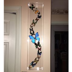 Hanna Chomas added a photo of their purchase butterfly display, framed butterflies, mounted butterflies, butterfly art, real butterfly art, butterflies in acrylic cases