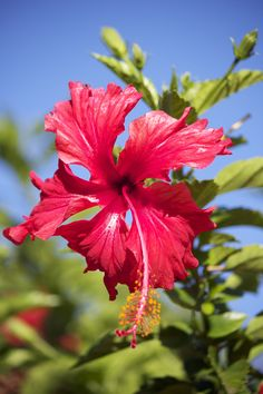 Hawai'i was soooo good to us. Mahalo!