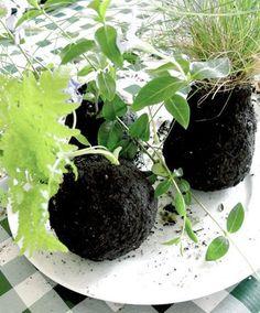 Kokedama string garden - the design sponge site is full of cool ideas String Garden, Ikebana, Indoor Garden, Indoor Plants, Container Gardening, Gardening Tips, Art Floral Japonais, Bonsai Soil, Eco Friendly House