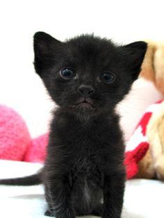 Hello, Kitty!  (love that mini-goatee on that precious face)