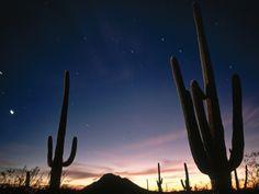 saguaro national park   Fondo de escritorio paisaje nocturo en el Saguaro National Park