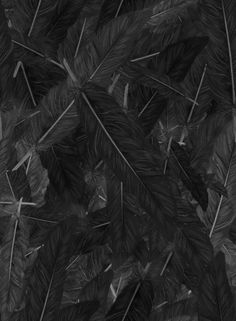 Lexie-- These feathers are cool because they're black, but you can almost see the feathery texture. You can also see the feather stems which glow in shades of grey. Elf Rogue, Black Swan, Black And White, Dark Grey, Half Elf, Feather Pattern, All Black Everything, Canvas Prints, Art Prints
