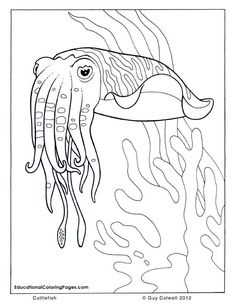 Onder water kleurplaten on pinterest fish coloring book for Cuttlefish coloring pages