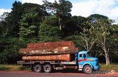 Perdida de la deforestacion