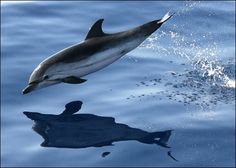 Doesn't matter how many times I see a dolphin . . . every time is just as special!