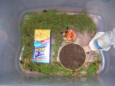 Picture of Cricket Breeding pt. Bearded Dragon Tank Setup, Bearded Dragon Diet, Cricket Farming, Dumpy Tree Frog, Cricket Insect, Lizard Habitat, Veiled Chameleon, Edible Insects, Cute Reptiles