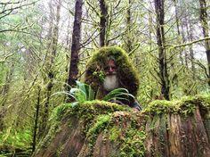 vivir en el bosque - Buscar con Google