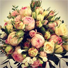 Rosas y más rosas pitiminí