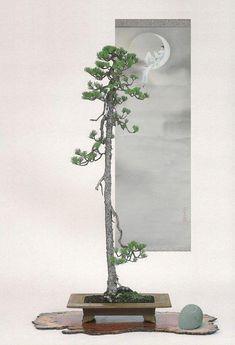 #IndoorBonsai Bonsai Ficus, Pine Bonsai, Indoor Bonsai Tree, Bonsai Art, Bonsai Garden, Ikebana, Single Tree, Potted Trees, Plant Decor