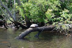 Pokomoke River State Park, Corkers Creek (2011)
