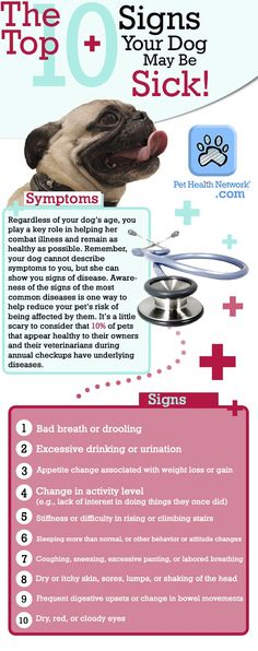 Signs Your Dog May Be Sick