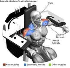 SHOULDERS -  DELTOID MACHINE