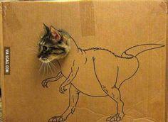 Cat. T-Rex.