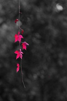 32 Ideas Flowers Photography Nature Leaves For 2019 Blur Image Background, Blur Background Photography, Studio Background Images, Background Images For Editing, Photo Background Images, Picsart Background, Nature Photography, Bath Photography, Photography Lighting
