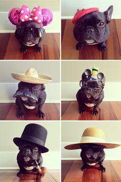 Fancy-dress Frenchie!